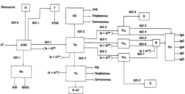 Схема 6.1.  Иммунный ответ.